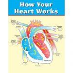 flow of heart